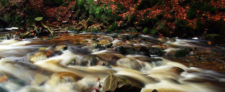 river scene cropped.jpg
